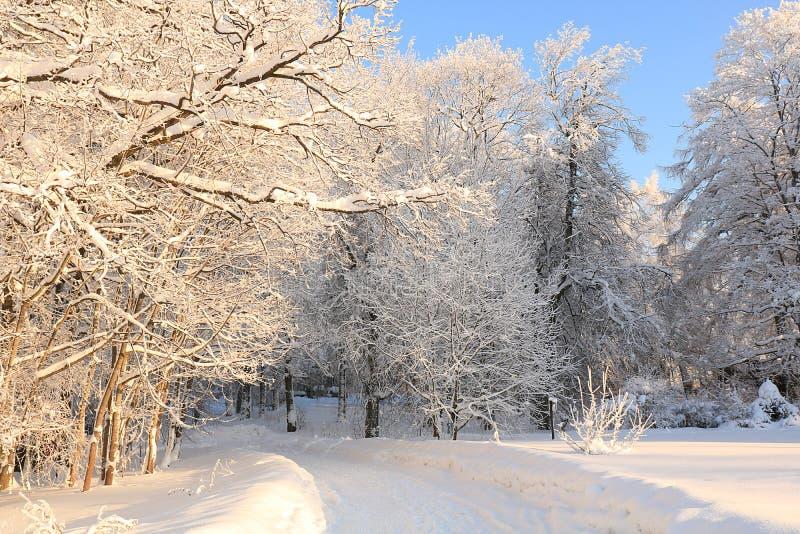 El pueblo ruso en invierno después del las nevadas, las ramas de los árboles se cubre con nieve y la chispa en el sol foto de archivo