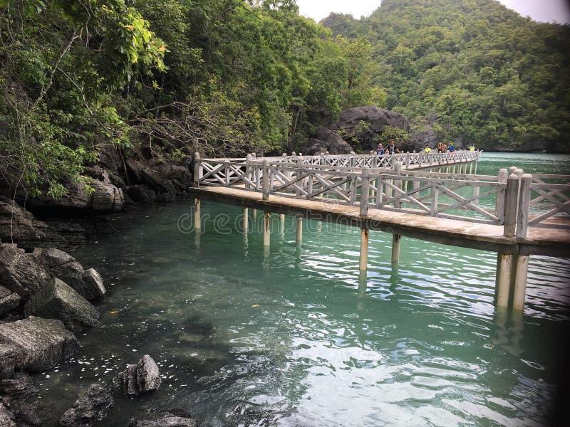 El puente al bosque del mangle imagen de archivo libre de regalías