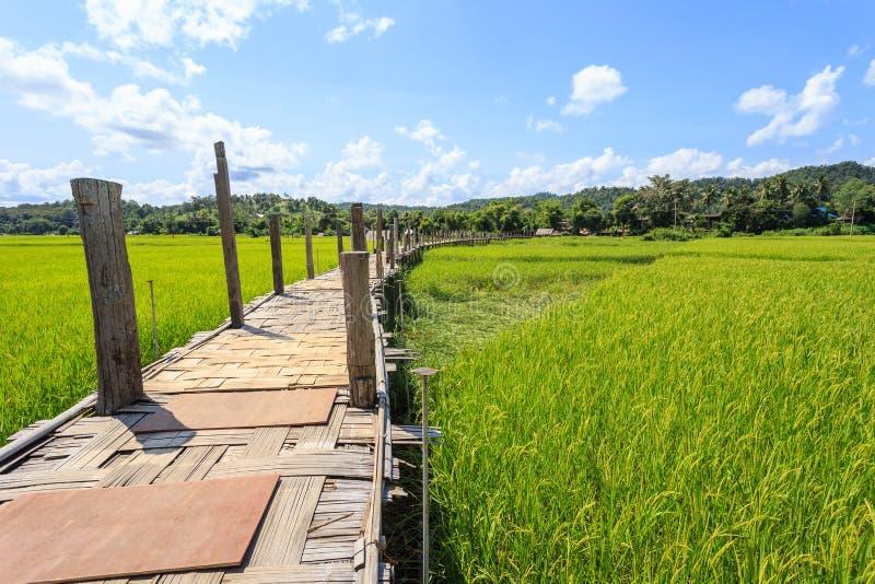 El puente de bambú nombró a Su Tong Pae hecho por el monje en el budista de Mae fotografía de archivo