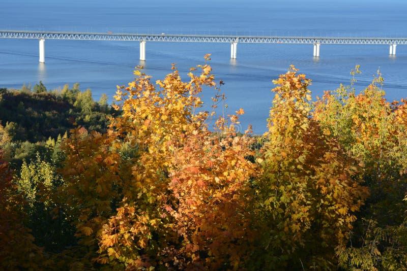 El puente sobre el r?o Volga y ?rboles de arce con follaje de oro en el primero plano D?a asoleado del oto?o fotos de archivo libres de regalías