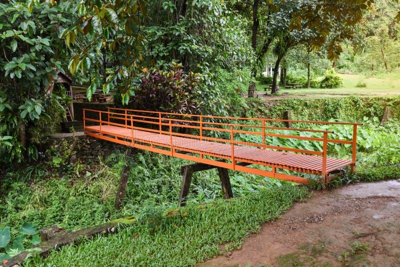 El puente y la planta verde del oído de elefante del caladium fotografía de archivo libre de regalías