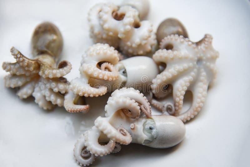 el pulpo o los calamares frescos hirvió los mariscos en la placa foto de archivo libre de regalías