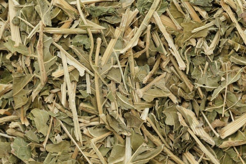 El rábano picante seco orgánico (rusticana del Armoracia) se va con el tronco foto de archivo libre de regalías