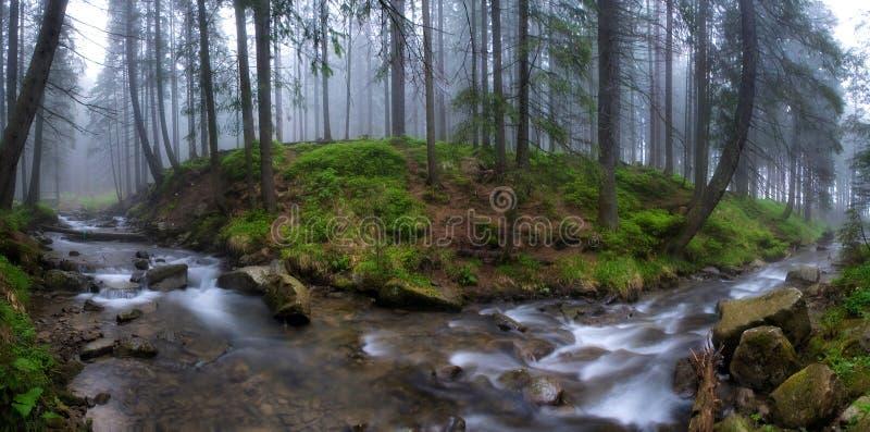 El río actual el Prut en una niebla foto de archivo libre de regalías