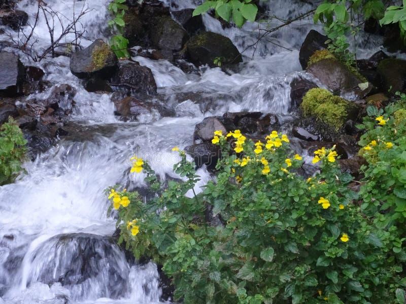 El río cae abajo top de la montaña imagen de archivo libre de regalías