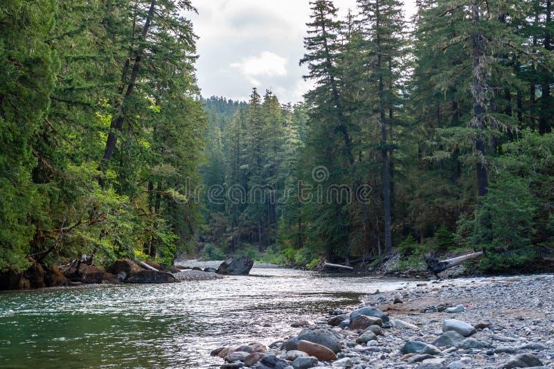 El río de Cowlitz en Washington imágenes de archivo libres de regalías