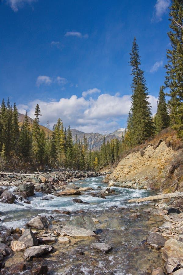 El río de la montaña en Altai imágenes de archivo libres de regalías