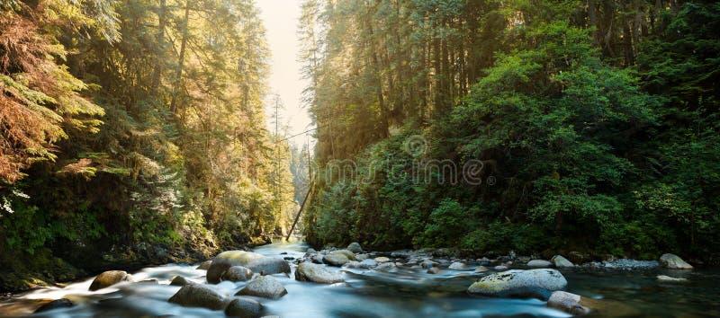 El río en Lynn Canyon en Vancouver del norte fotografía de archivo libre de regalías