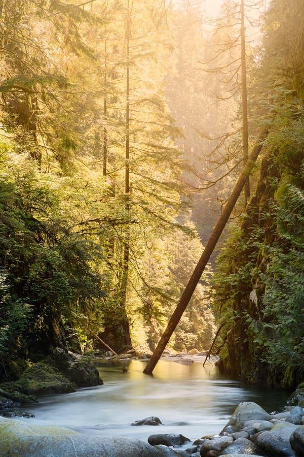 El río en Lynn Canyon en Vancouver del norte fotografía de archivo