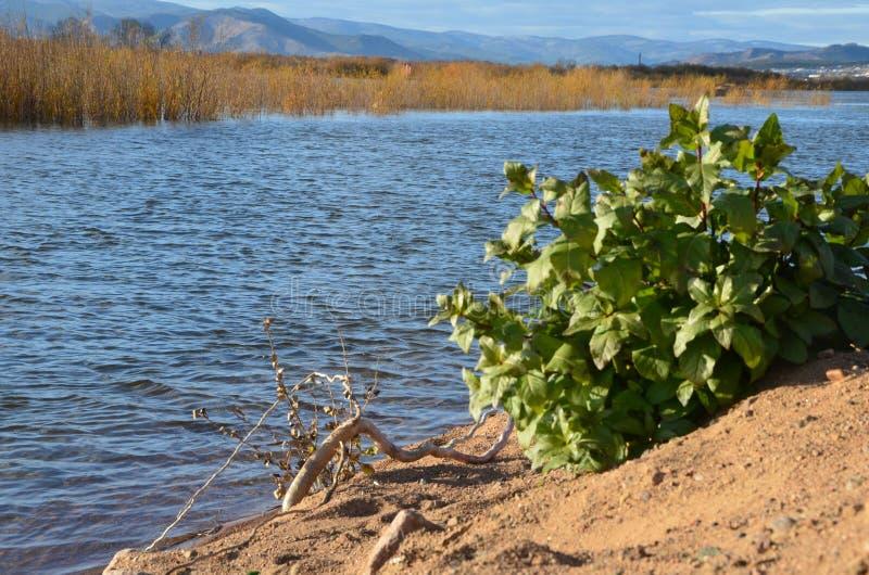 El río, la orilla y la vegetación fotografía de archivo