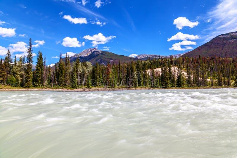 El río rápidamente de mudanza de Athabasca en Athabasca cae en Jasper Nati fotografía de archivo libre de regalías