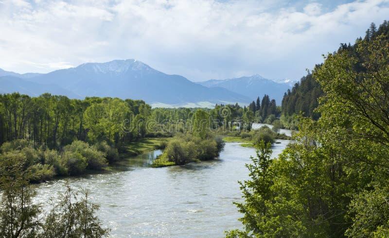 El río Snake South Fork en el valle del cisne de Idaho imágenes de archivo libres de regalías