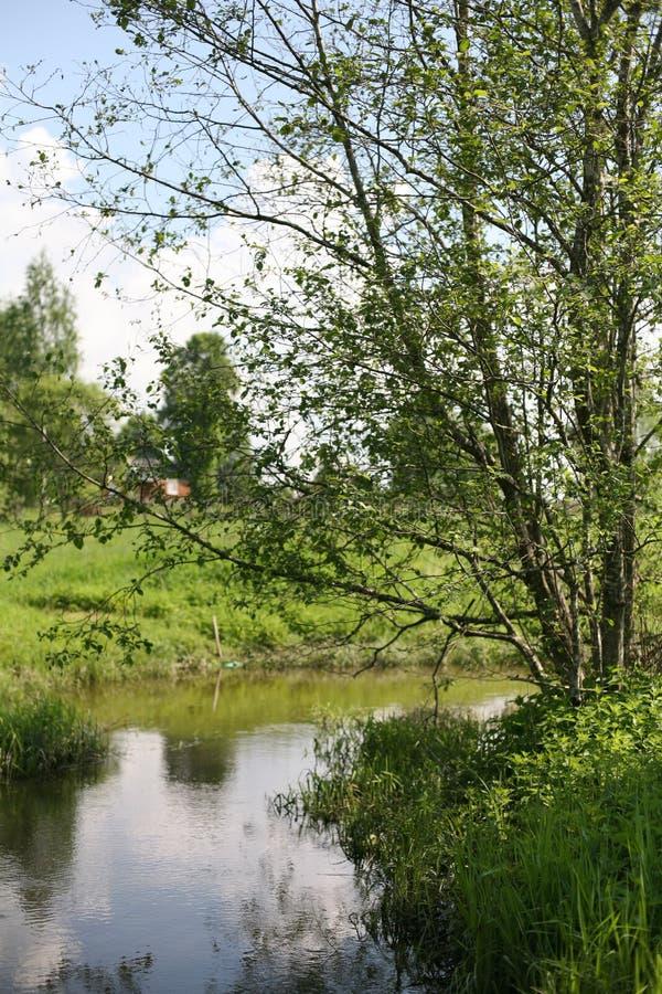 El río y un árbol imágenes de archivo libres de regalías
