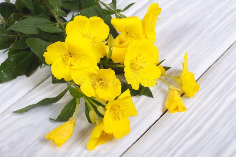 El ramo de amarillo florece el oenothera en una tabla de madera fotos de archivo libres de regalías