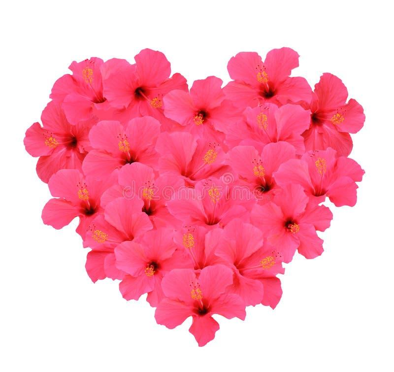 El ramo de la forma del corazón hecho de hibisco florece (aislado en el fondo blanco) fotos de archivo