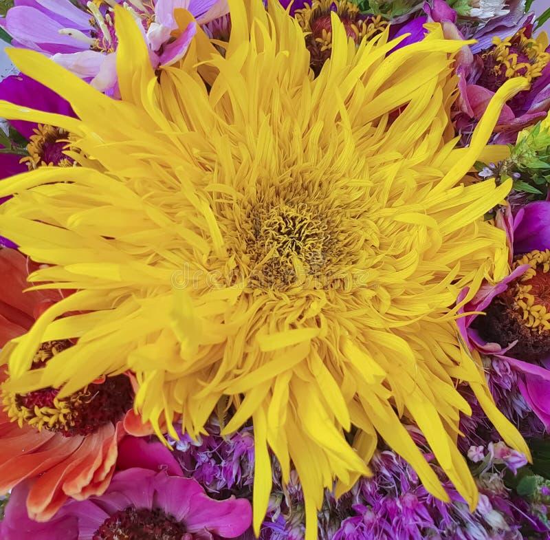 El ramo de otoño florece, girasol de la composición, fondo estacional imagenes de archivo