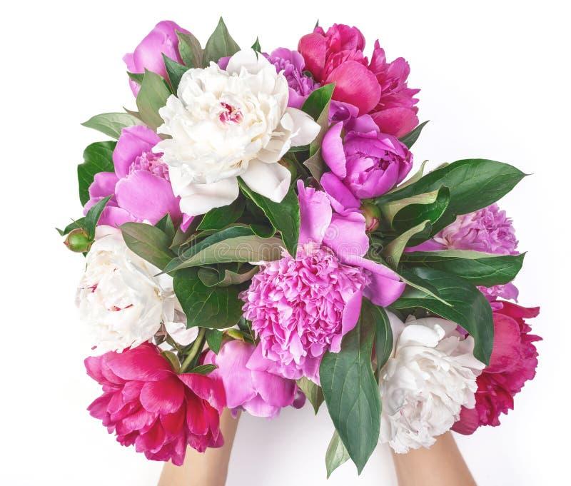 El ramo de peonía rosada y blanca florece en la mano del ` s de la mujer aislada en el fondo blanco Endecha plana imagen de archivo