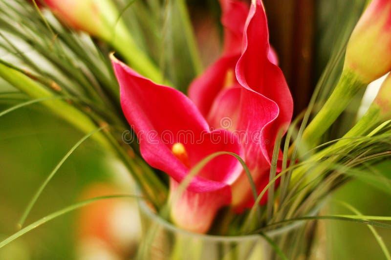 El ramo de rojo florece el abstrac foto de archivo