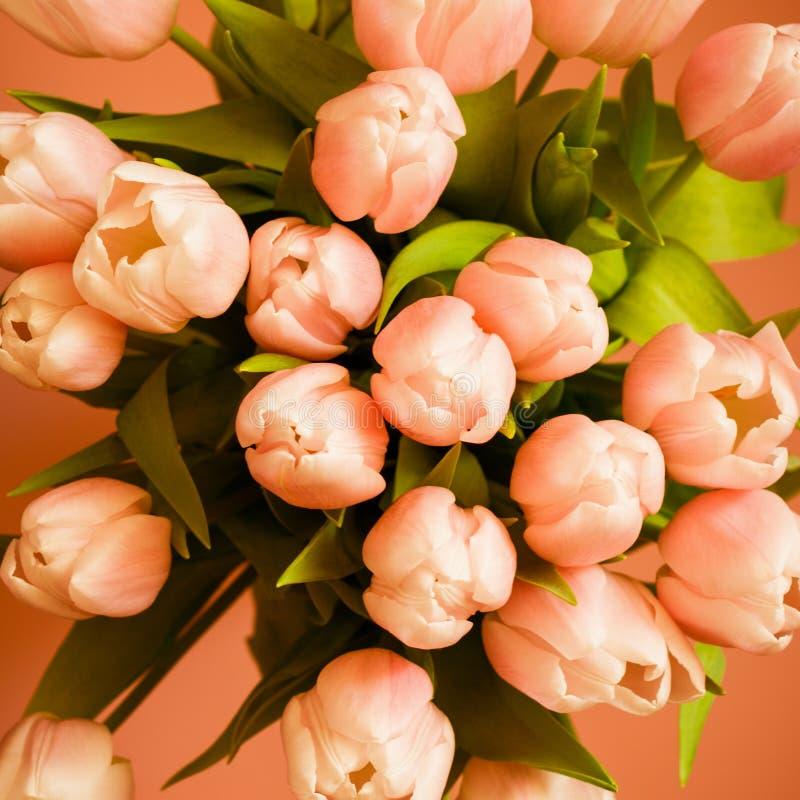 El ramo de tulipanes coralinos rosados en fondo en colores pastel foto de archivo