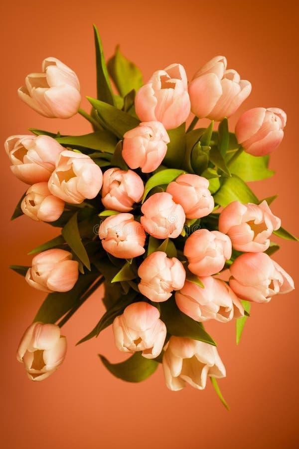 El ramo de tulipanes coralinos rosados en fondo en colores pastel fotografía de archivo