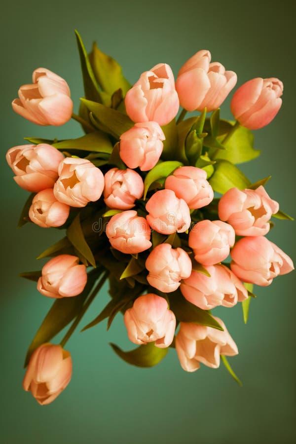 El ramo de tulipanes coralinos rosados en fondo en colores pastel fotos de archivo