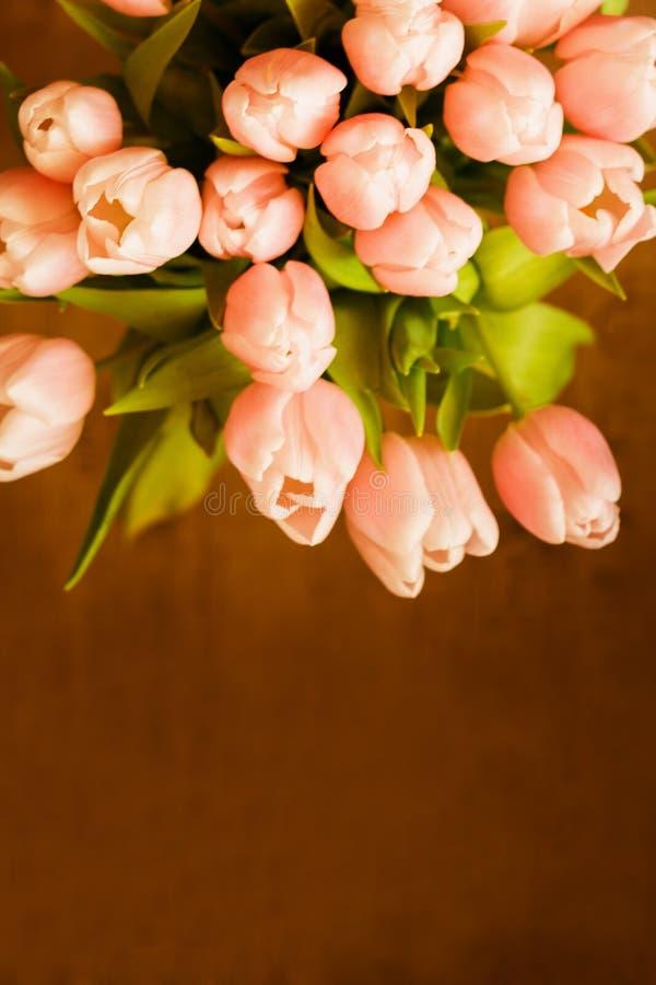 El ramo de tulipanes coralinos rosados en fondo en colores pastel imágenes de archivo libres de regalías