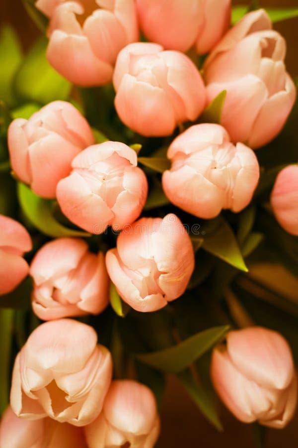 El ramo de tulipanes coralinos rosados en fondo en colores pastel imagenes de archivo