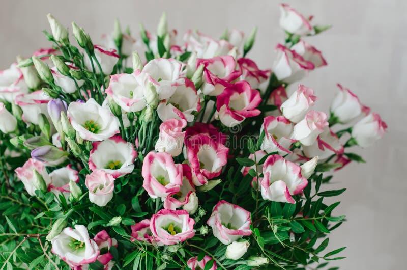 El ramo romántico hermoso de eustoma rosado y blanco florece macro en un fondo blanco imagen de archivo libre de regalías