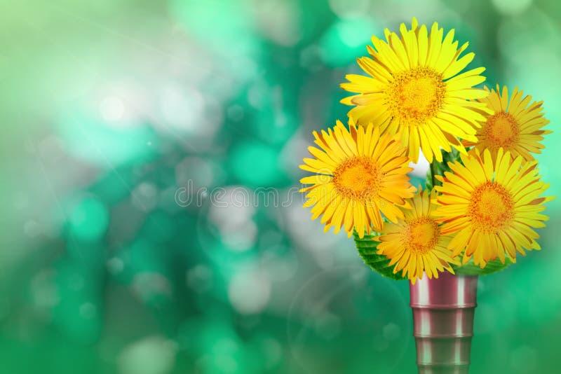 El ramo vivo hermoso del ramo de la margarita o de la manzanilla en florero moderno del metal con el lugar en blanco para su text foto de archivo libre de regalías