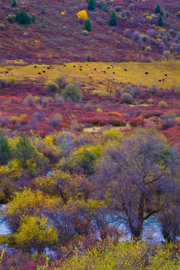El Rangeland colorized en meseta imagenes de archivo