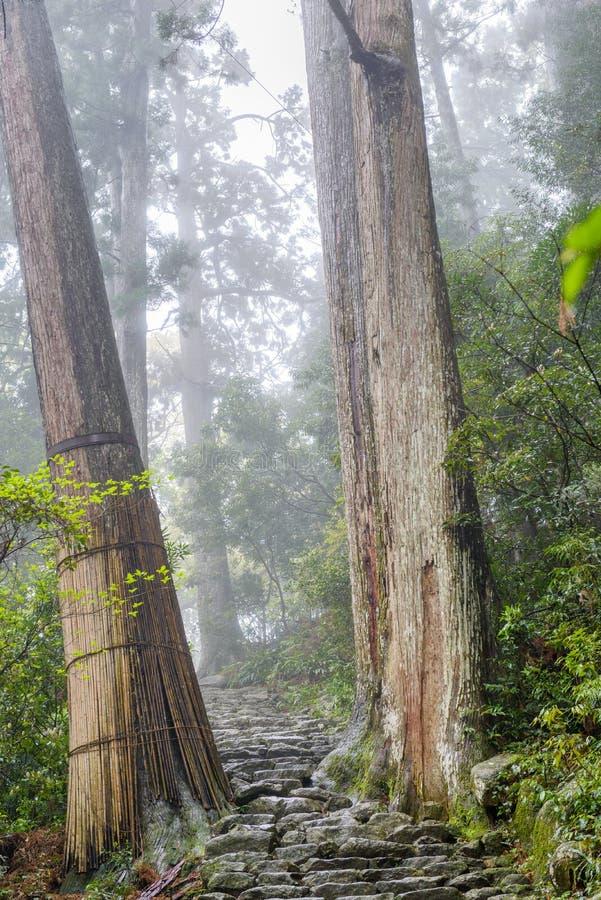 El rastro de Kumano Kodo, un rastro sagrado en Nachi, Japón imagen de archivo libre de regalías