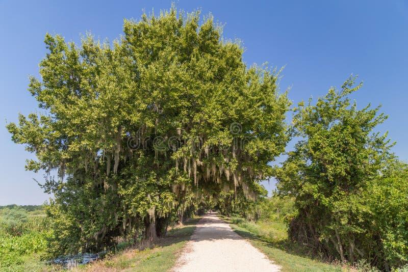 El rastro rodeado por los árboles y la otra vegetación en Brazos doblan el parque de estado cerca de Houston, Tejas fotos de archivo libres de regalías