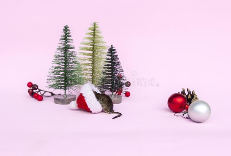 El ratón gris está buscando los regalos, dulces del caramelo en sombrero rojo de la Navidad La rata es símbolo del Año Nuevo 2020 imagen de archivo libre de regalías
