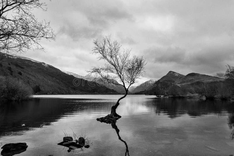El ?rbol solitario - Llanberis Pa?s de Gales del norte Reino Unido fotos de archivo libres de regalías
