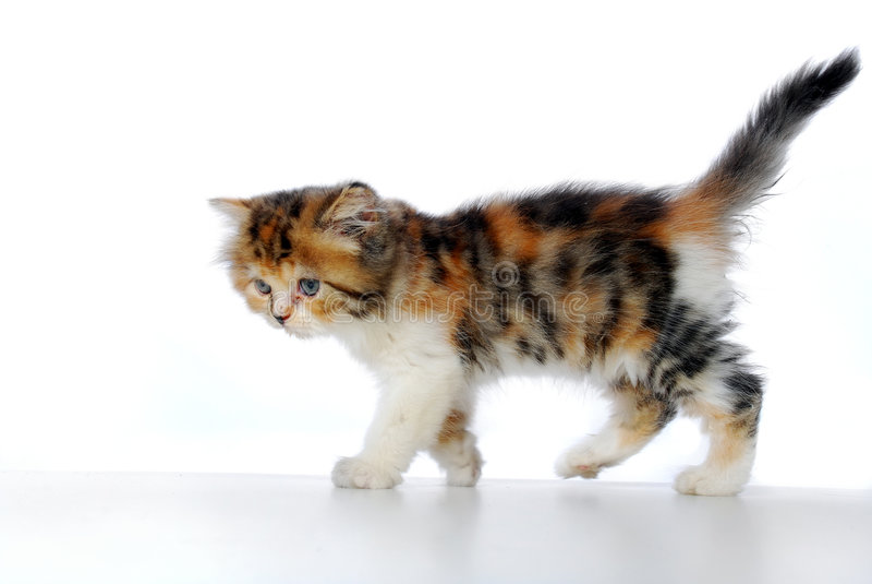 El recorrer del gatito imagenes de archivo