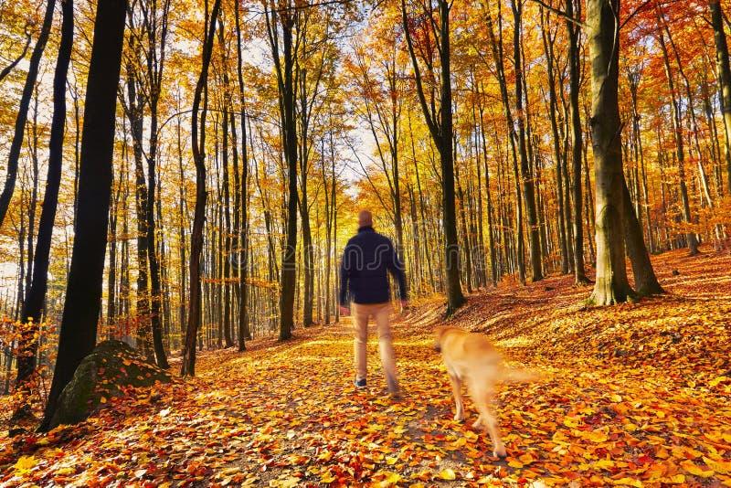 El recorrer en bosque del otoño imagenes de archivo