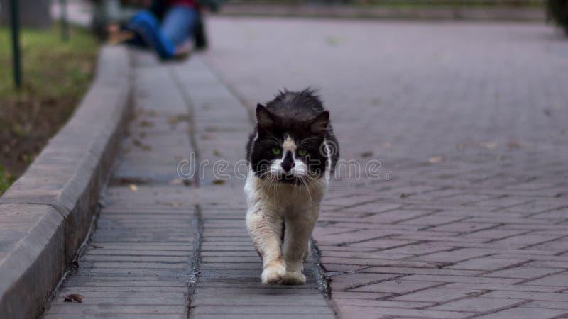 El recorrido felino por la vida foto de archivo