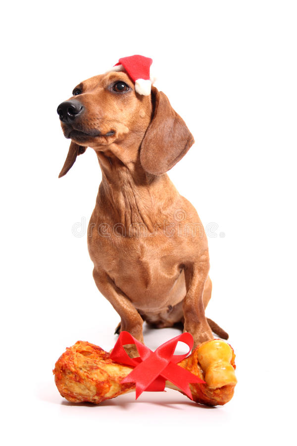 El regalo del perro de la Navidad fotos de archivo libres de regalías