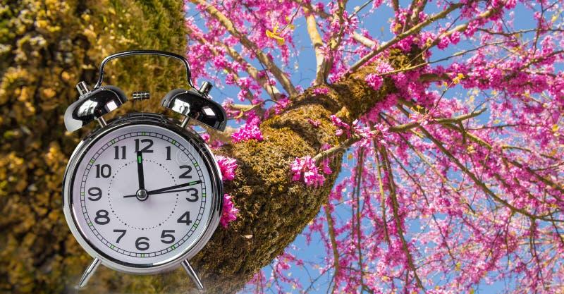 El reloj de tiempo de primavera florece el espacio para su texto, fondo de la naturaleza fotografía de archivo