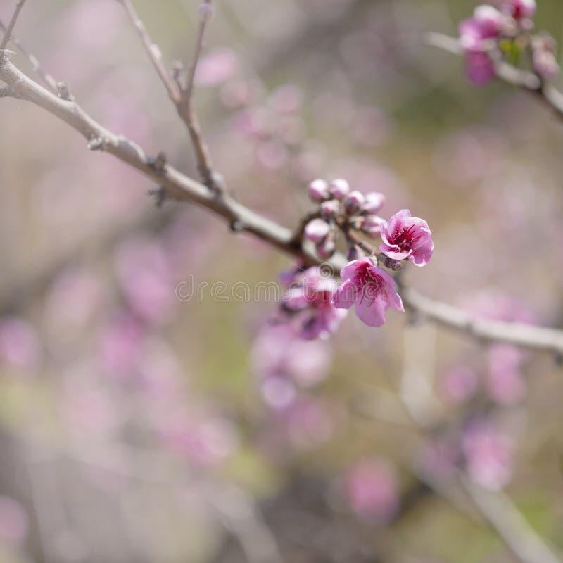 El resorte florece fondo fotografía de archivo libre de regalías