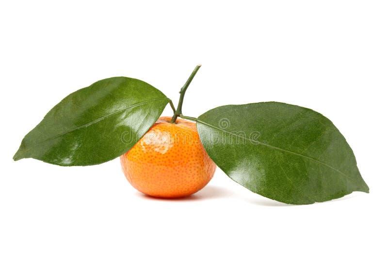 El reticulata de la fruta cítrica de la mandarina, también conocido como el mandarín o el mandarín imágenes de archivo libres de regalías
