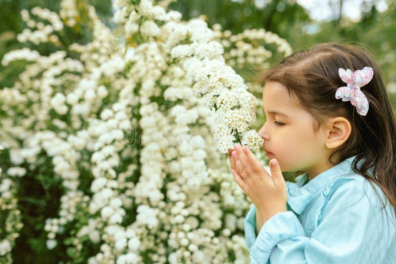 El retrato al aire libre del primer del niño bonito huele las flores blancas en el parque de la ciudad imágenes de archivo libres de regalías