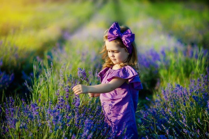 El retrato de la niña linda está descansando en un campo de la lavanda imagen de archivo libre de regalías