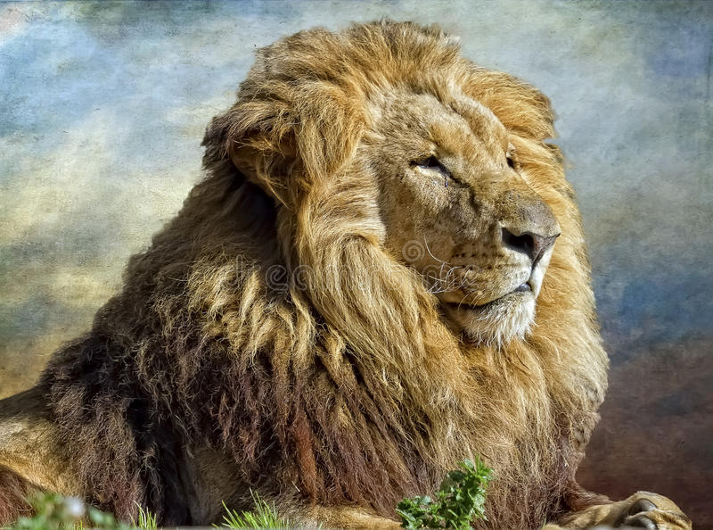El rey del león imagenes de archivo