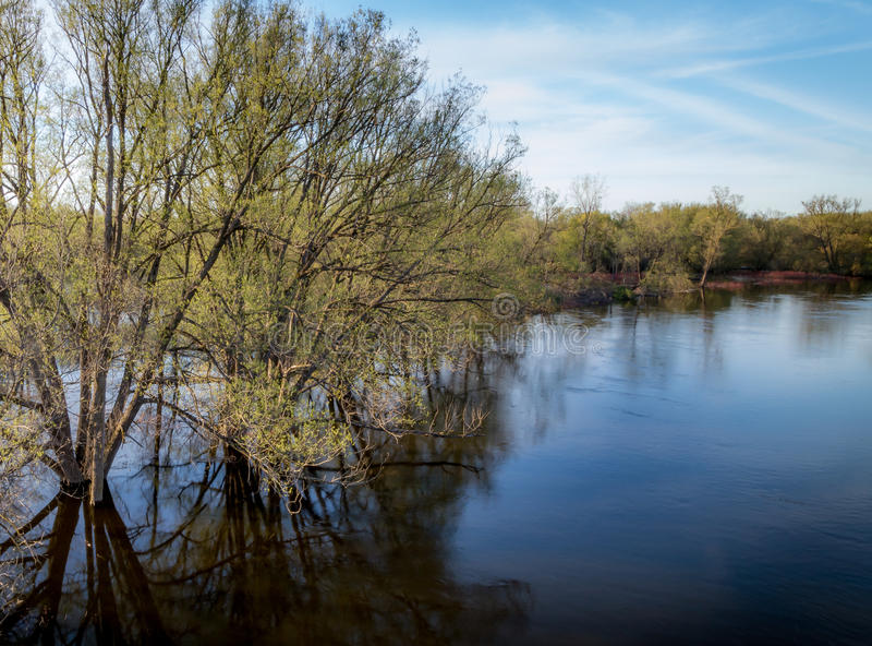 El Riverbank se derrama en árboles vecinos fotos de archivo libres de regalías