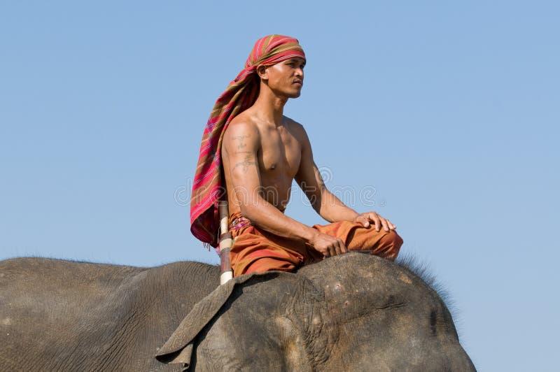 El rodeo anual del elefante en Surin, Tailandia imagen de archivo libre de regalías