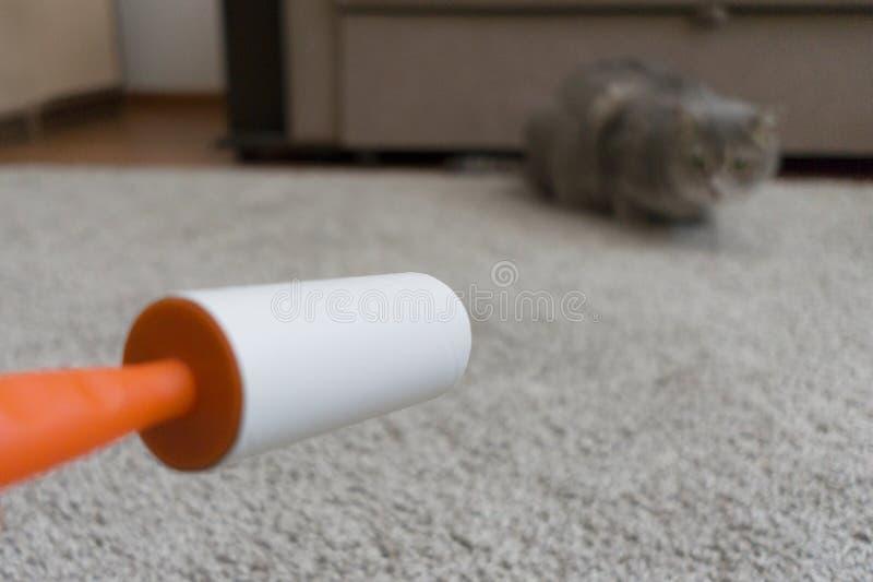 El rodillo pegajoso limpia la alfombra del pelo del gato fotografía de archivo libre de regalías