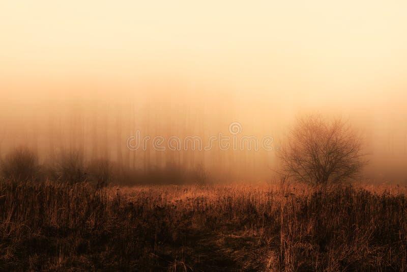 El rojo anaranjado de la mañana mágica coloreó paisaje de niebla del árbol forestal imágenes de archivo libres de regalías
