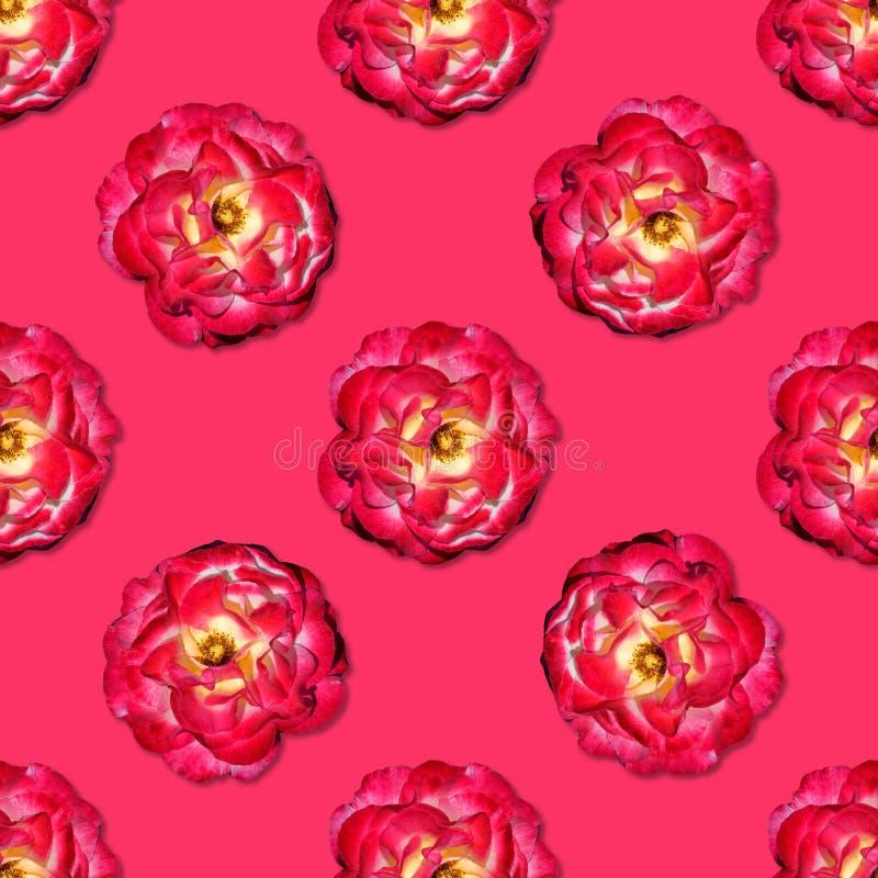 El rojo de la vid subió modelo inconsútil Visi?n superior Endecha plana Modelo floral ilustración del vector