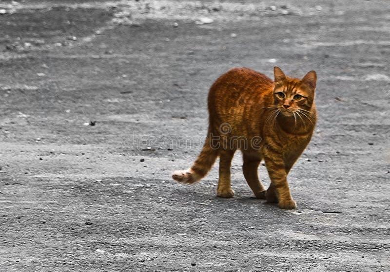 EL ROJO DEL CAT imagenes de archivo